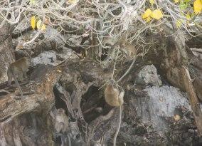 Monkey swinging from a tree